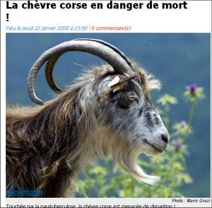 A capra corsa minacciata di smarisce. U populu corsu dinù