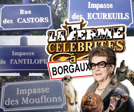Ville de Borgaux o Zoo de Borgaux ?