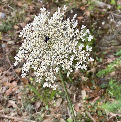 Ritrattu : fleursducruzzini.fr