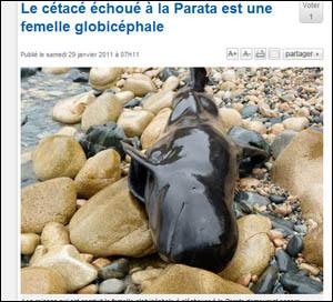 Balena morta in Aiacciu : avia anch'ella manghjatu à u Quick ?