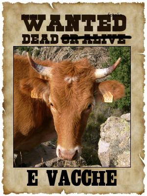 Voi dinù, tumbate una vacca corsa