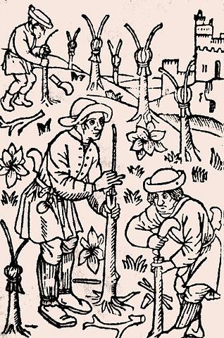 Punera è insitera di castagni à u XIVu seculu, Pietro de' Crescenzi, Wikimedia Commons