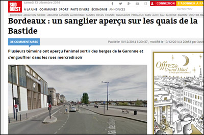 Invasione di cignali in Bordeaux