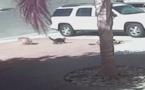 Un ghjattu face scappà u cane è salva un zitellu