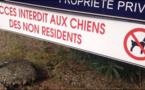 Statutu di residente : si principia cù i cani