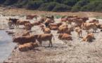 Vacche 2, Turisti 0